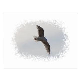 Seagull flying overhead postcard