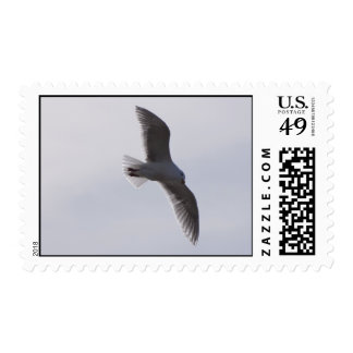 Seagull flying overheadimproved postage