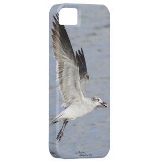 Seagull flying with food in mouth iPhone Case iPhone 5 Cases