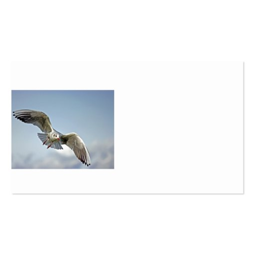 Seagull Flying with Wings Spread Double-Sided Standard Business Cards (Pack Of 100)