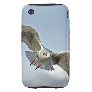Seagull Flying with Wings Spread Tough iPhone 3 Cases