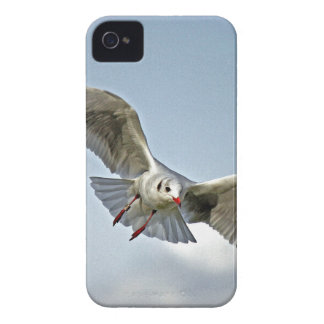 Seagull Flying with Wings Spread iPhone 4 Case-Mate Cases