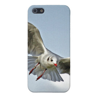 Seagull Flying with Wings Spread iPhone 5 Case