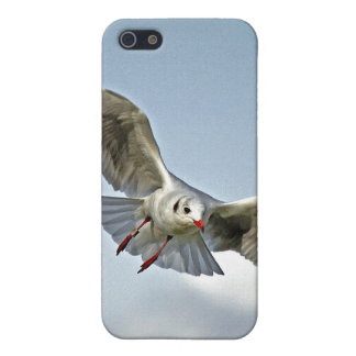 Seagull Flying with Wings Spread iPhone 5 Cases