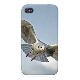 Seagull Flying with Wings Spread iPhone 4 Covers