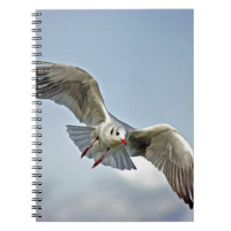 Seagull Flying with Wings Spread Notebooks