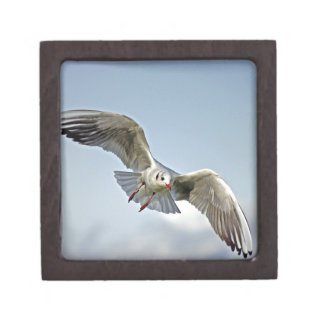Seagull Flying with Wings Spread Premium Jewelry Box