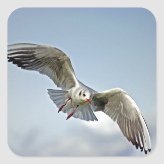 Seagull Flying with Wings Spread Sticker