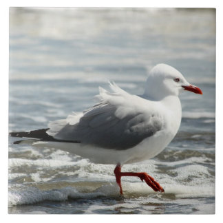 Seagull getting its feet wet ceramic tile