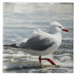 Seagull getting its feet wet large square tile