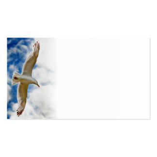 Seagull gliding in flight close up with blue skies business card templates