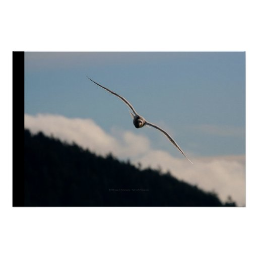 Seagull Gliding Poster