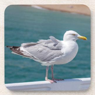 Seagull hard plastic coasters