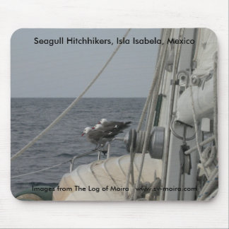 Seagull Hitchhikers, Isla Isabela, Mexico Mouse Pad