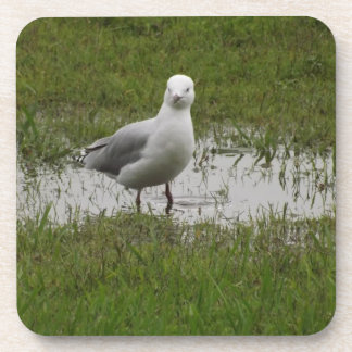 Seagull in a Puddle Beverage Coaster