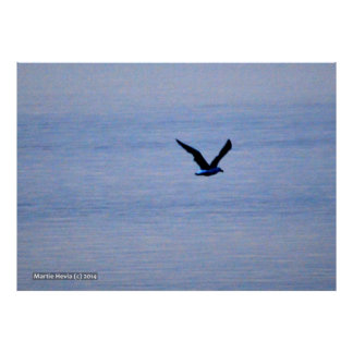 Seagull in Blue Print