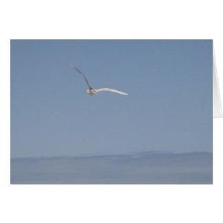 Seagull in Flight Card