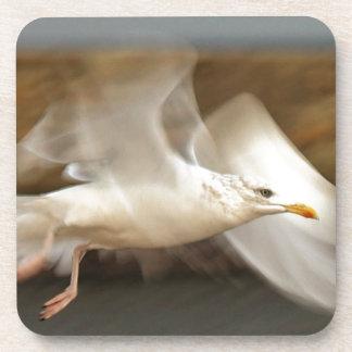 Seagull in flight Coaster