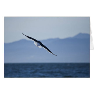 Seagull in Flight Greeting Cards