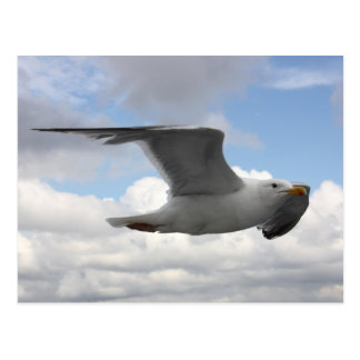 Seagull in Flight Over Norway Postcard