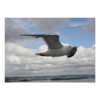 Seagull in Flight Over Norway Poster