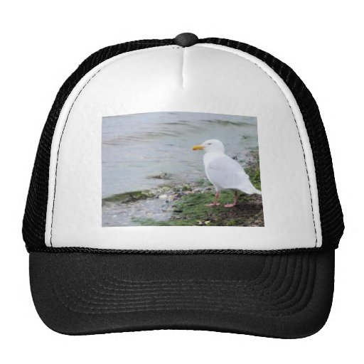 SEAGULL in kotz Trucker Hat