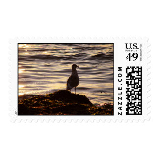 Seagull In Sunlight Postage Stamp