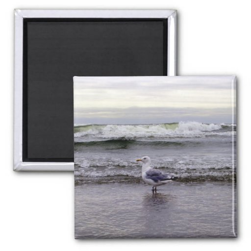 Seagull in the Ocean Magnet