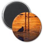 Seagull in the Sunset Fridge Magnet