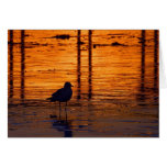 Seagull in the Sunset Greeting Cards