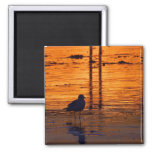 Seagull in the Sunset Magnets