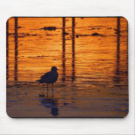 Seagull in the Sunset Mousepads