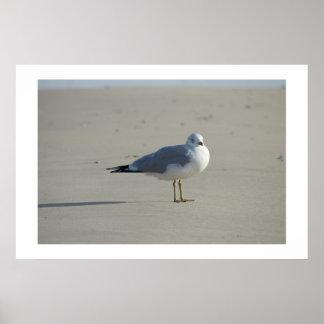 Seagull In Waiting Print