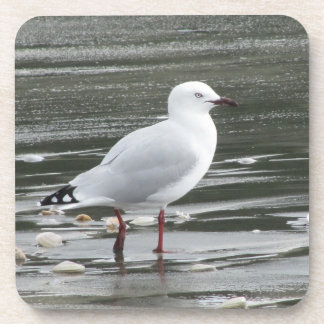 Seagull in Water Beverage Coaster