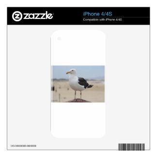 Seagull iPhone 4 Skin