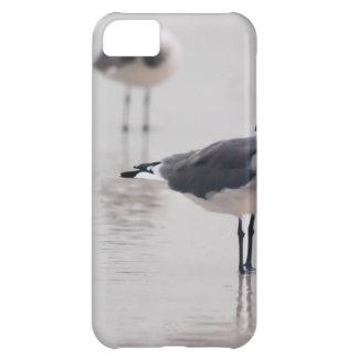 Seagull iPhone 5C Cases