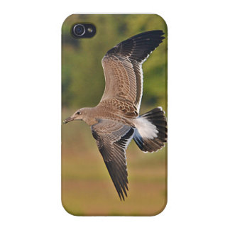 SeaGull IPhone Case iPhone 4 Cases