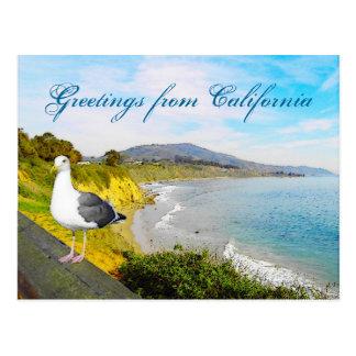 Seagull Island Post Card