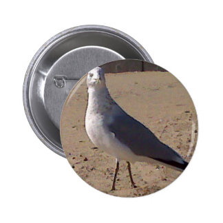 seagull items buttons