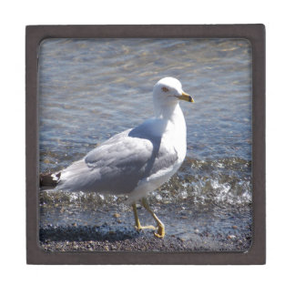 Seagull Jewelry Box