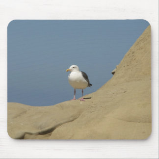 Seagull, La Jolla, California Mouse Pad