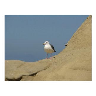 Seagull, La Jolla, California Postcard