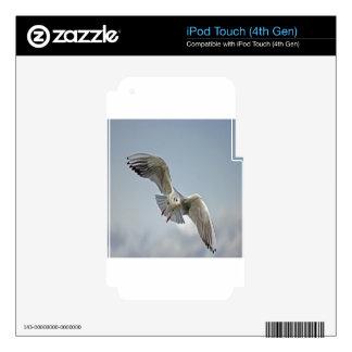 Seagull lake balaton nature design decal for iPod touch 4G