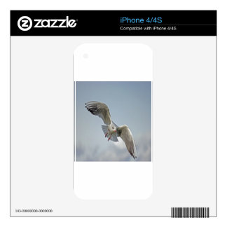 Seagull lake balaton nature design skins for the iPhone 4S
