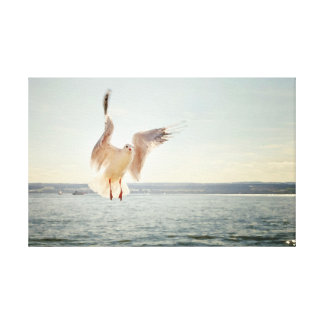 Seagull Landing on Water Canvas Print