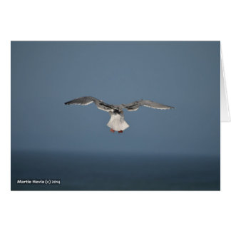 Seagull Leaves Card