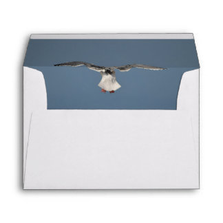 Seagull Leaves Envelope