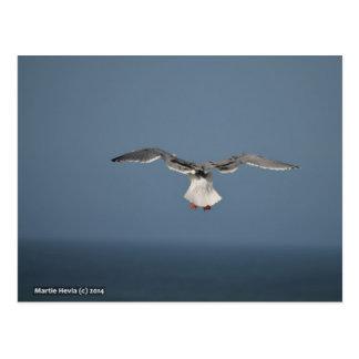 Seagull Leaves Postcard