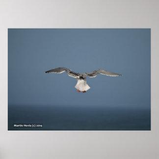 Seagull Leaves Print