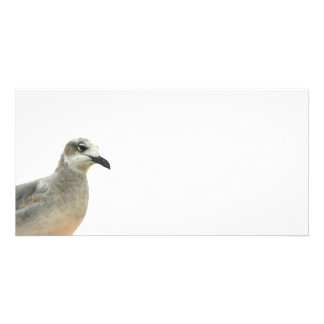Seagull Left Corner of frame Photo Card
